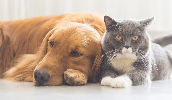 What Your Pet Is Trying To Tell You With These Common Signals